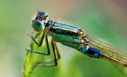 close up of damsel fly