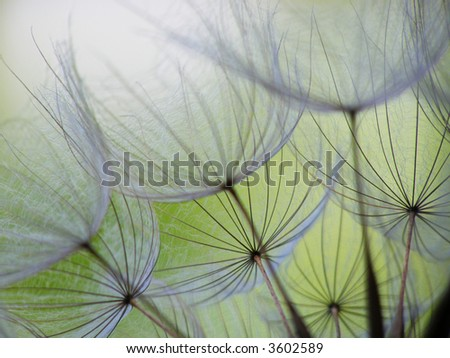 Close-up of dandelion seed with an abstract touch