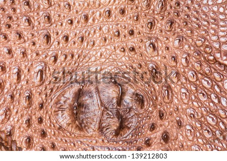Close up of detailed crocodile skin texture