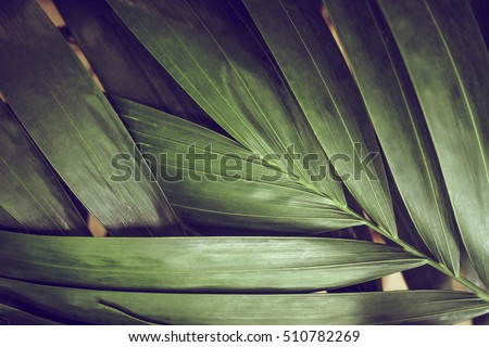 Close-up of detailed rainforest jungle leaves for background #510782269