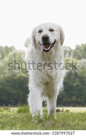 Close up of dog walking in park