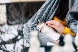 Close up of domestic cat in hands of unrecognizable woman. Unknown female strokes cute pussycat