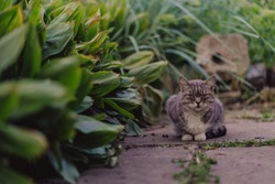 Close up of domestic cat walking in garden. Cute pussycat sniffs grass, tracking someone in nature.
