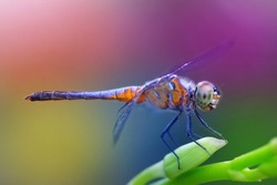 Close up of dragon fly.
