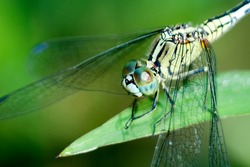 Close up of dragonfly in the nature
