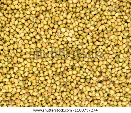 Close up of dried coriander seeds  #1180737274