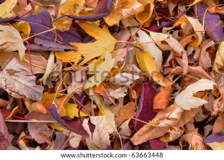 Close-up of Dried Fall Leaves