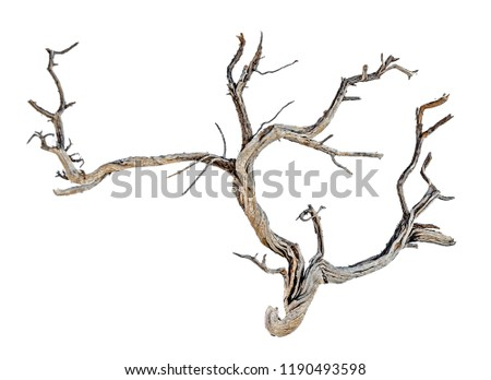 close up of dry branch  #1190493598