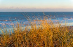 Close up of dune grass at sunset in the sand dunes of Oostende (Ostend in English) by the North Sea, West Flanders, Belgium.