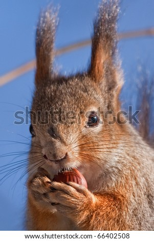 Close-up of eating squirrel