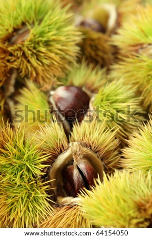Close-up of edible sweet chestnuts. Shallow dof