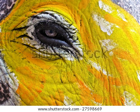 Close up of elephants eye decorated and painted for Jaipur elephant Festival, India