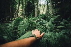 Close up of explorer male hand in green rainy forest.Survival travel,lifestyle concept.