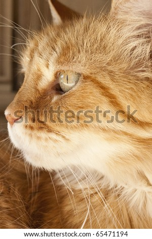 Close up of face of Cat