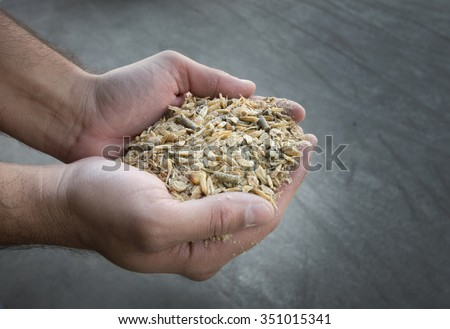 Close up of farmer's hand holding compound cattle feed in palms #351015341