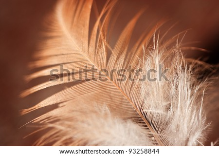 Close up of feather against golden brown background