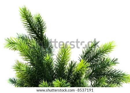 Close up of fir tree brach isolated on white