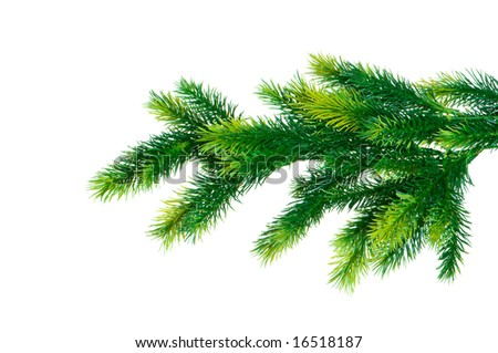 Close up of fir tree branch isolated on white #16518187