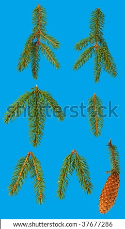 Close up of fir tree branches and  cone isolated on blue - stock photo