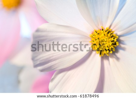 Close-up of flower against white background . Opposite light. Shallow depth of focus #61878496
