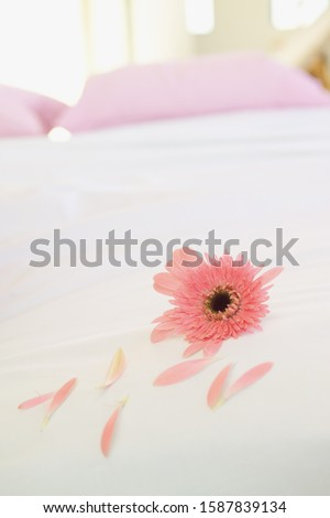 Close up of flower and petals on bed