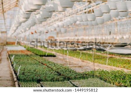 Close up of Flower and Vegetable Seedings in Greenhouse #1449195812