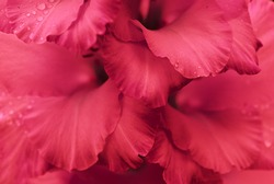 close up of flower petals