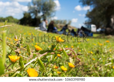 Close Up of Flowered Meadow on Blur Family Pic-Nic Background in a Sunny Day