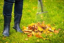 Close Up Of Foots Of Female Gardener And Tool Rake With Fallen Colorful Fall Leaves In Autumn Park. Cleaning Leaves.