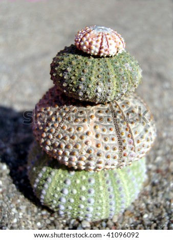 Close up of four urchin shells on sand,forming a pyramid.