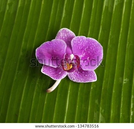 Close up of fresh banana leaf and pink orchid