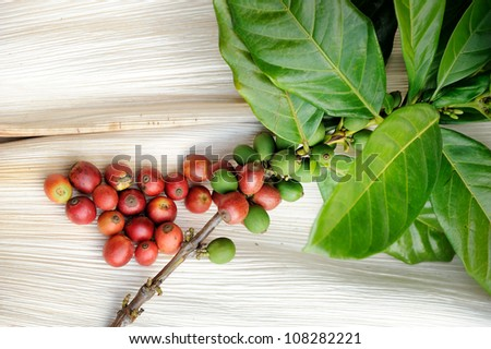 Close up of fresh coffee beans with leaf on texture background, selective focus.
