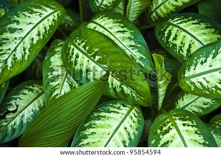 Close-up of fresh green foliage