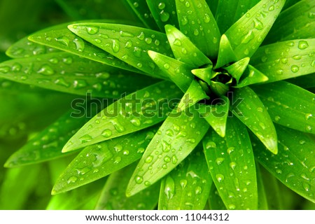 Close-up of fresh green foliage with water drops after rain