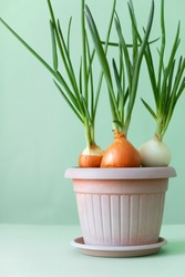 Close-up of fresh green onion sprouts in a flower pot. vertical photo