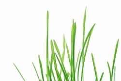 Close-up of fresh green straws against white background
