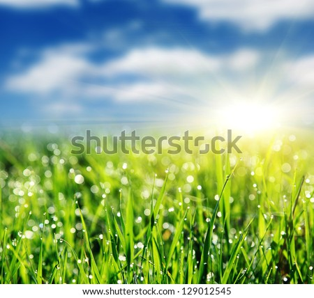 Close up of fresh morning dew on spring grass with blue sky