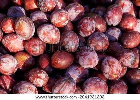 close-up of fresh plums, top view, agrotourism, healthy food