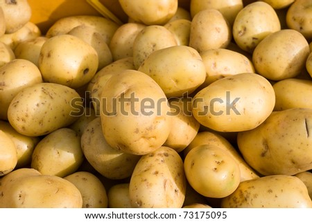Close-up of fresh potato in daylight