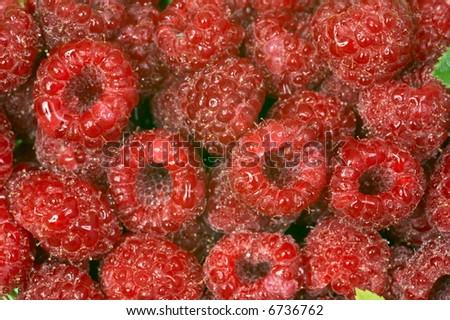 close-up of fresh raspberries for backgrounds