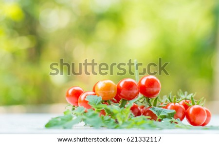 Close-up of fresh, ripe tomatoes on wood background #621332117