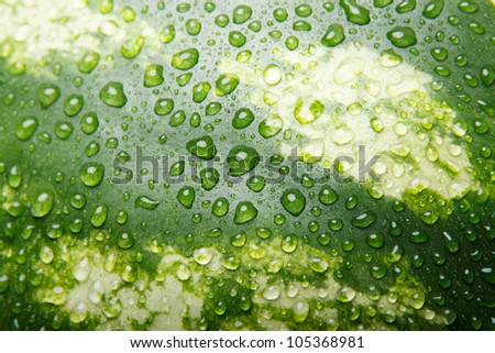 Close-up of fresh watermelon texture with water drops.