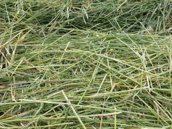 Close-up of freshly mowed grain as a picture background