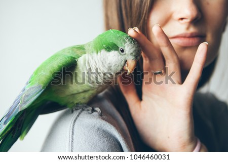 Close-up of friendly and cute Monk Parakeet. Green Quaker parrot is sitting on woman shoulder. Woman is petting parrot. #1046460031