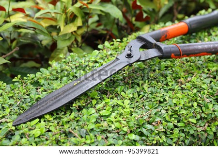 Close-up of Garden shears on tree