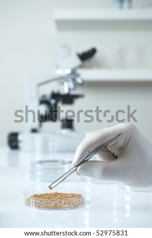 Close up of genetically modified seed in laboratory with microscope