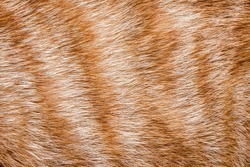 Close-up of ginger cat fur