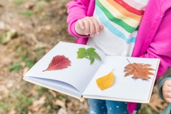 Close up of girl collecting colorful leaves for a herbarium on a warm autumn day in the forest. Children exploring the outside nature.