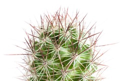 Close up of globe shaped cactus with long thorns  on white background.