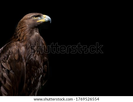 Close up of Golden Eagle head on the black background Stock photo ©